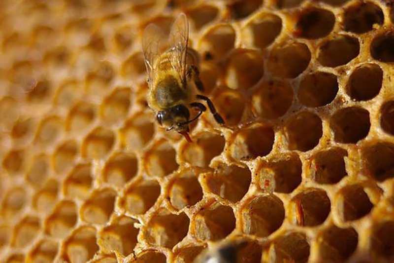 Auckland University of Technology Develops Honeycombs Through 3D Printing