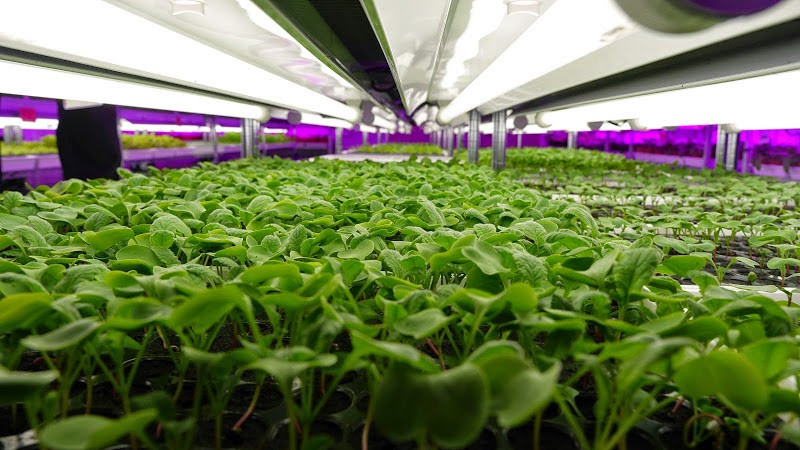 Singapore to lead the way in urban agriculture and aquaculture